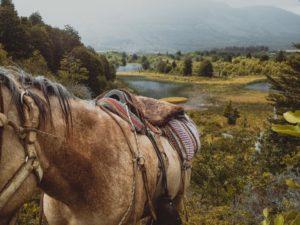 horse patagonia